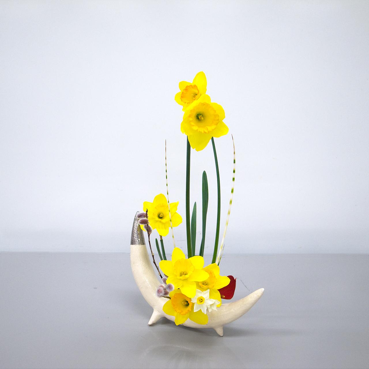 自由花 ラッパ水仙、水仙、縞ふとい、赤目柳、アンスリウム
