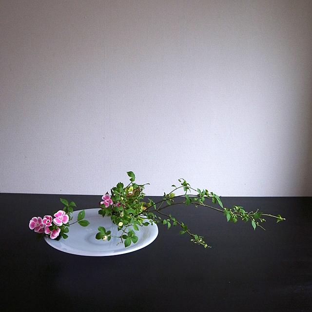 自由花 錦木、石竹、りょうぶ