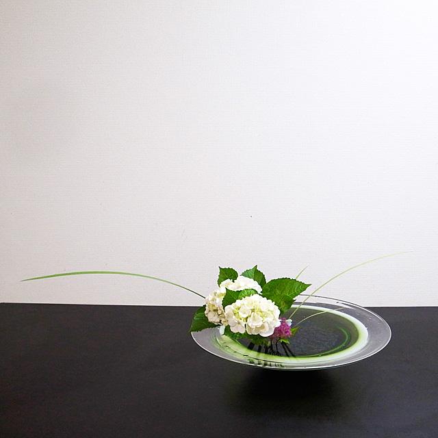自由花 紫陽花、オクロレウカ、下野、デルフィニウム