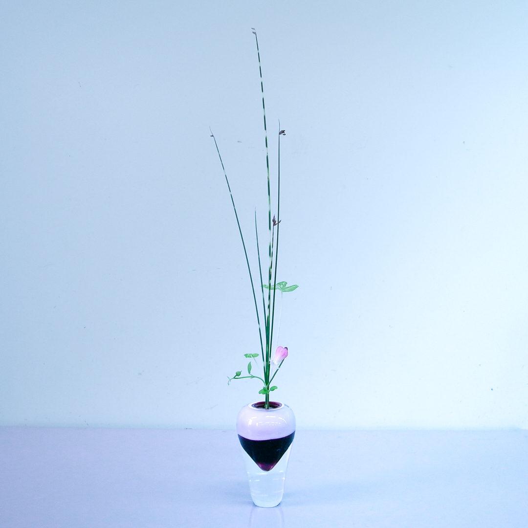 生花正風体 縞ふとい、カラディウム、ベル鉄線
