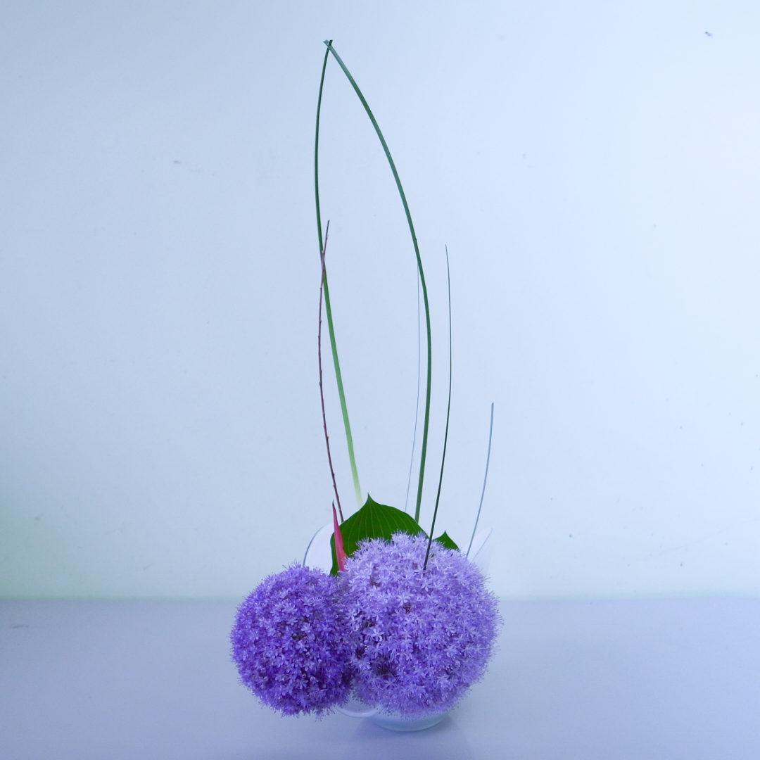 自由花 ギガンジウム、擬宝珠、スチールグラス、ヘレコニア、赤柳