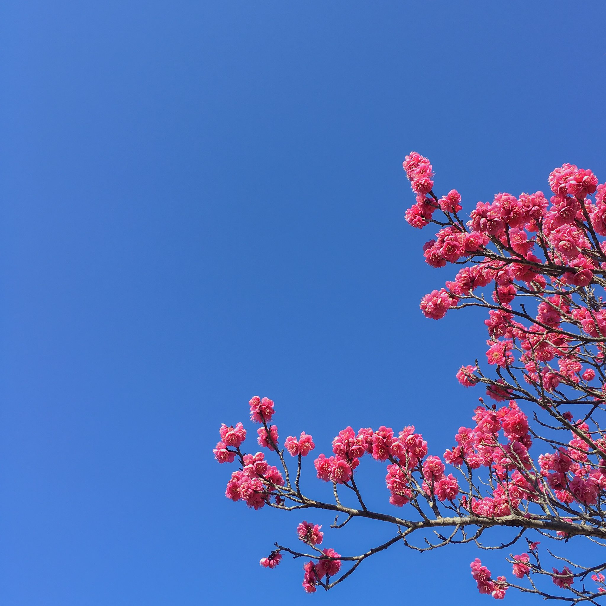 春はもうそこまで来ている